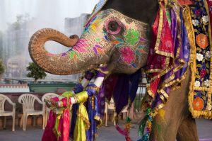 india_elephant